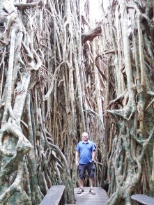Craig amongst the Cathedral Fig tree roots