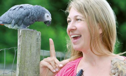 """Anna Oblasser-Mirtl – """"Arbeite mit mir!"""" – Animal Training Center"""