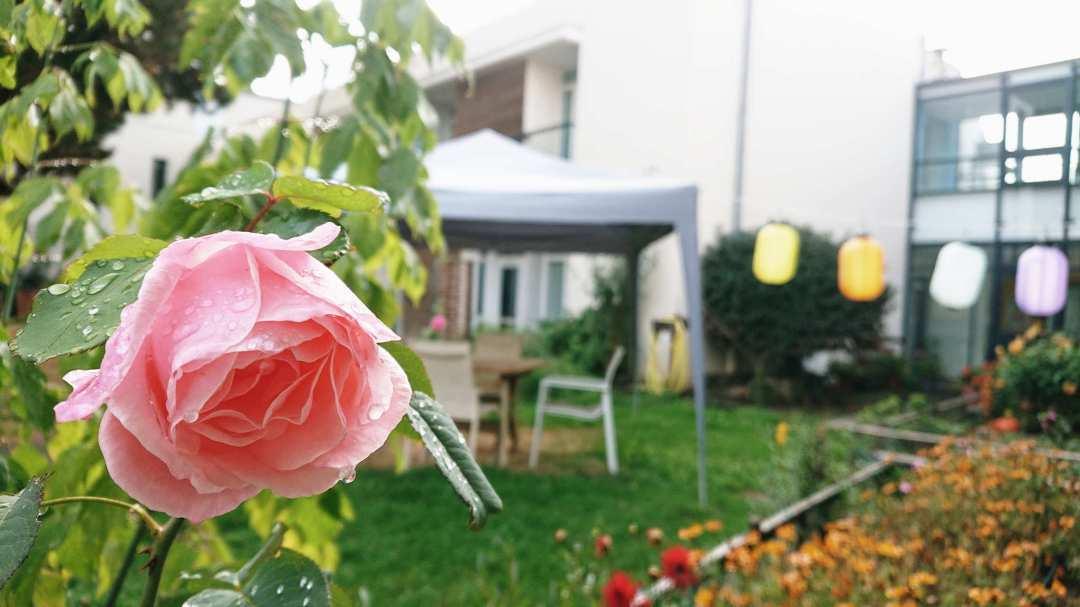 rose rvo