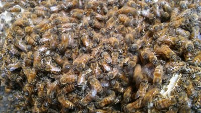 Close up of bees on the honeycomb.