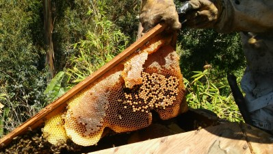 Gorgeous honeycomb.