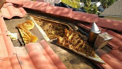 Honeycomb inside roof cavity.