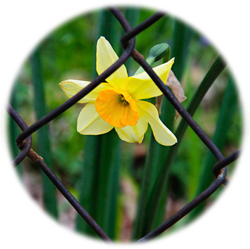 1-sad-daffy-behind-bars-andee-photography