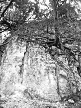 beech-on-cliff