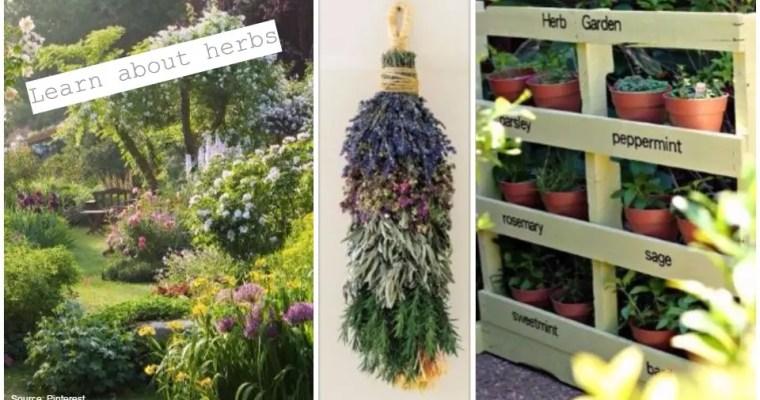哪些香草植物可以避免蟲害?