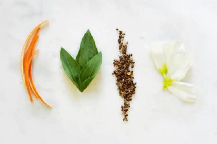 植萃祕境:香氛世界的自白