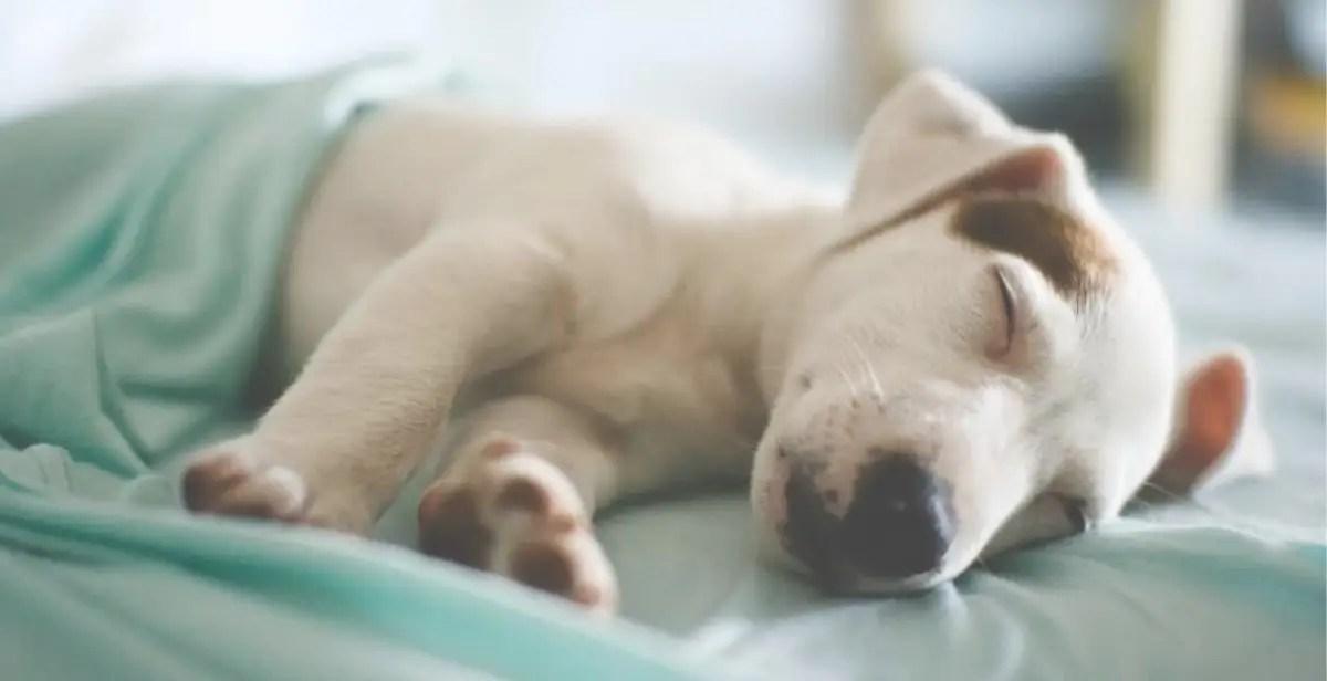 別輕視睡眠的重要性|睡眠的益處