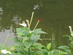 6 wetlandp may13