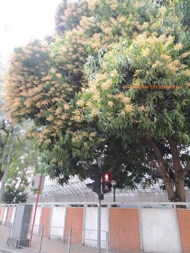 mango broadwood rd 2014