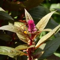 萬物逢春 - 昆蟲篇 spring awakening - insects