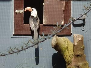 Im Zoo Neuwied gibt es sehr viele verschiedene Vogelarten zu sehen.