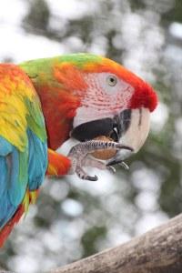Gerne lassen sich die Papageien von den Besuchern füttern.