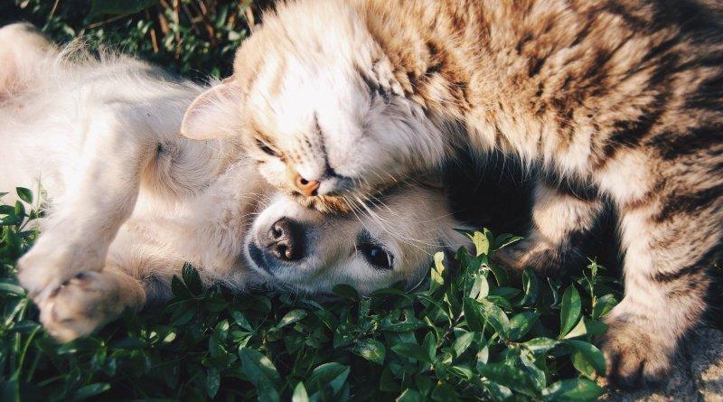 Bundesweiter Warntag Tierhalter