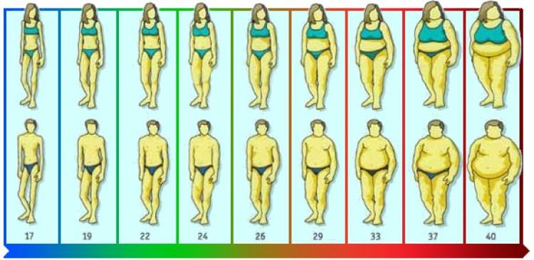 индекс массы тела таблица