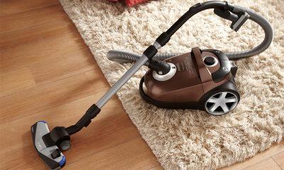 Как избавиться от ковровых блох в домашних условиях