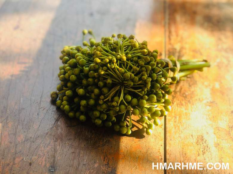 Kawtebel (Trevesia palmata) in Hmar and its kindred peoples in Northeast India, the young flower buds are first boiled and prepared as Hmarchadeng (chutney) with chilli and fermented fish. The buds are also fried