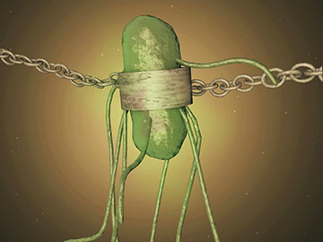 Scientists have genetically recoded a strain of <I>E. coli</i> to depend on a synthetic amino acid so the bacteria can't survive outside the lab. Image: Jennifer Hinkle