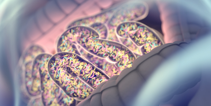colorida ilustración digital de bacterias en el intestino