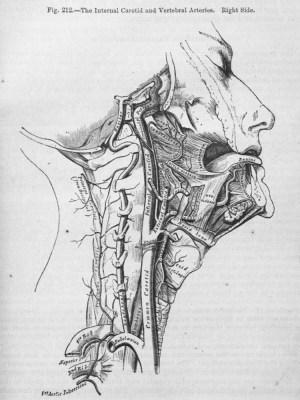 Research: Anatomy | Photo Skills B: Cyb