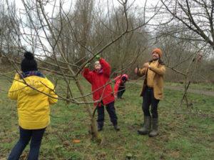 Feb 2017 - pruning underway
