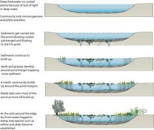 Climax and SubClimax Communities in Chosen Terrestrial and Aquatic Ecosystems | HND Ecology Blog