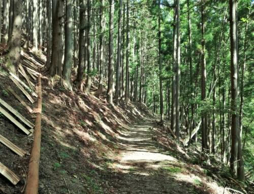 いこいの路並木道