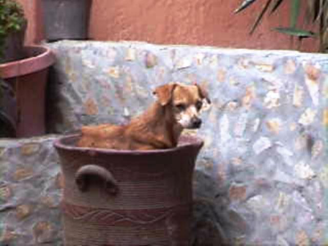 Día Internacional del Perro
