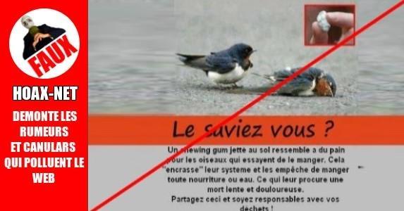 CHEWING-GUM MORTEL POUR LES PIGEONS