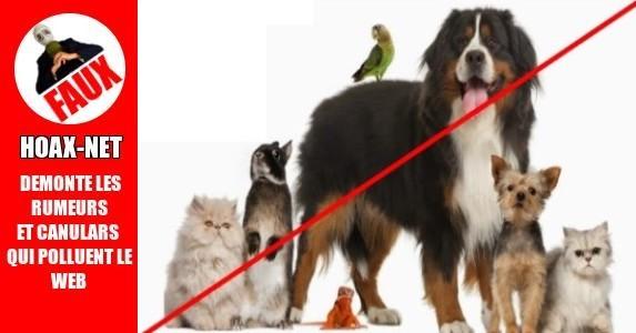 Taxe de l'Union Européenne sur les animaux de compagnie.