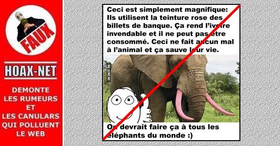 Non, on ne teint pas les défenses des éléphants en rose pour les protéger !