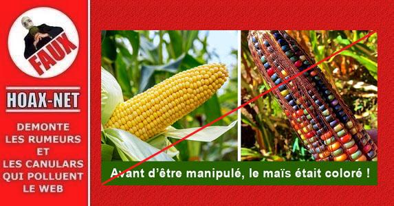 Non, le maïs multicolore n'a pas été manipulé pour devenir jaune