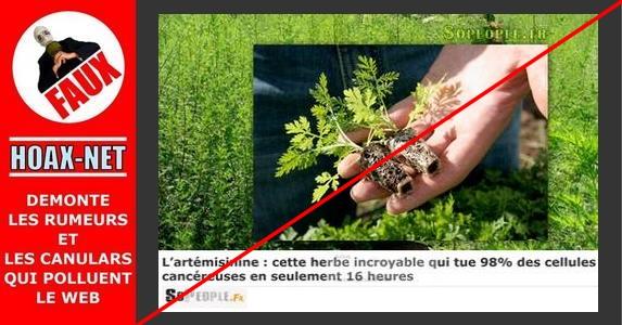 NON, l'artémisinine n'est pas une herbe incroyable anti-cancer !