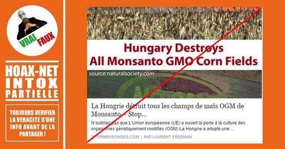 Non, la Hongrie n'a pas détruit tous les champs de maïs OGM de Monsanto.