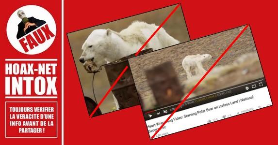 Non, l'image d'un ours blanc affamé n'est pas la preuve du réchauffement climatique