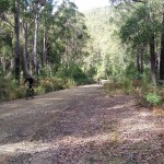 Backroad Tasmania mountain biking
