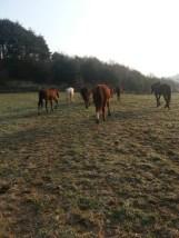 Um die Pferde, auf dem Weg zur großen Koppel, nicht über die Straße führen zu müssen, gibt es die Zwischenkoppel.