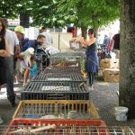 Salg av kyllinger, høner og ender - Marked i Bayeux