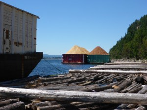 I took shelter from the wind on a miles-long log raft across from the pulp mill at Nanaimo Bay.