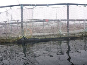 Salmon farm pen up close.