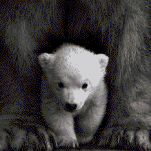 MyHobby borduurpakket - ijsbeer