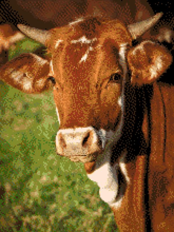MyHobby borduurpakket - koe
