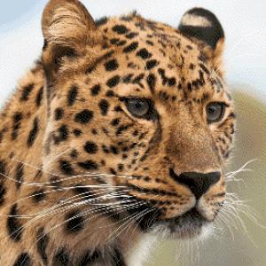 MyHobby borduurpakket - luipaard