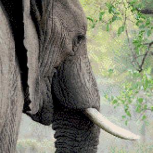 MyHobby borduurpakket - Olifant
