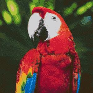 MyHobby borduurpakket - papegaai
