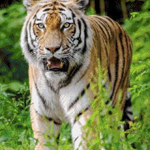 MyHobby borduurpakket - tijger