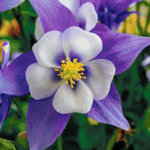 MyHobby borduurpakket - wit paarse bloem