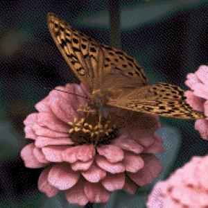 MyHobby borduurpakket - bruine vlinder op bloem