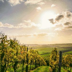 MyHobby borduurpakket - wijngaard