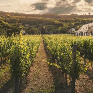 MyHobby borduurpakket - wijngaard bij het huis