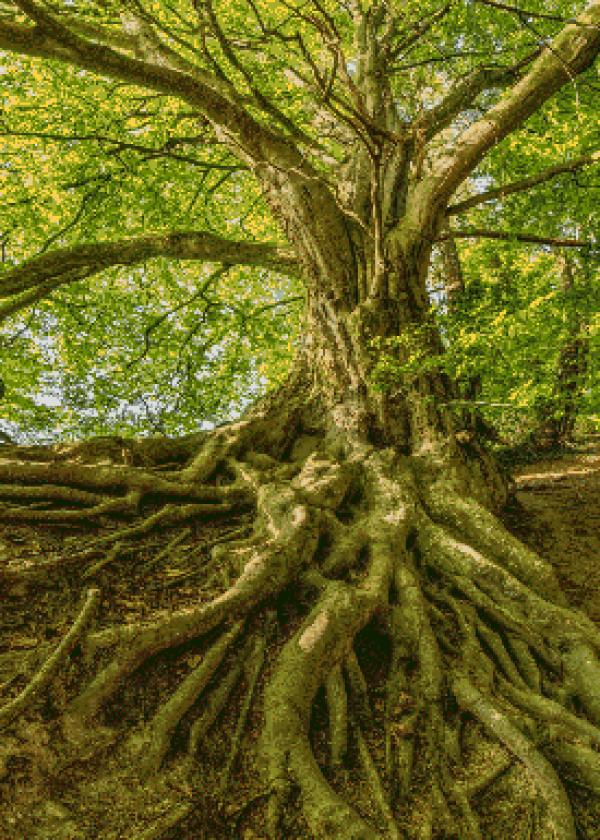 MyHobby borduurpakket - gewortelde boom